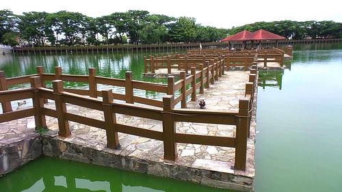 【台南景点】天鹅湖环保水上公园~木栈道垂柳随风摇曳