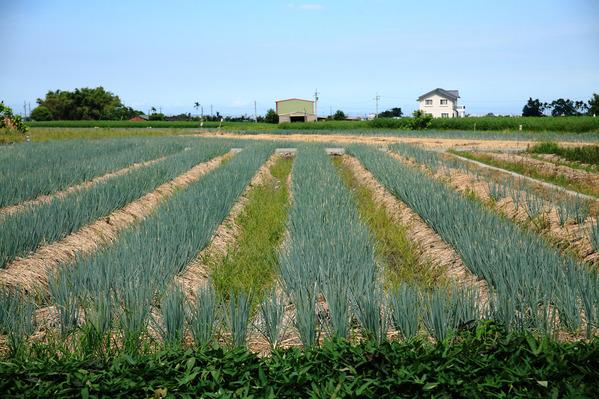 「農夫青蔥體驗農場」的圖片搜尋結果